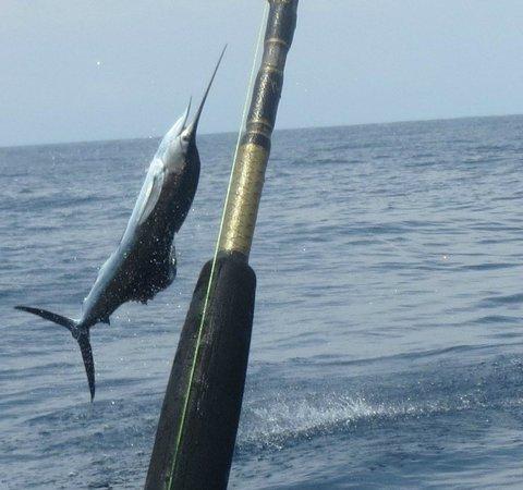 California hook up sportfishing