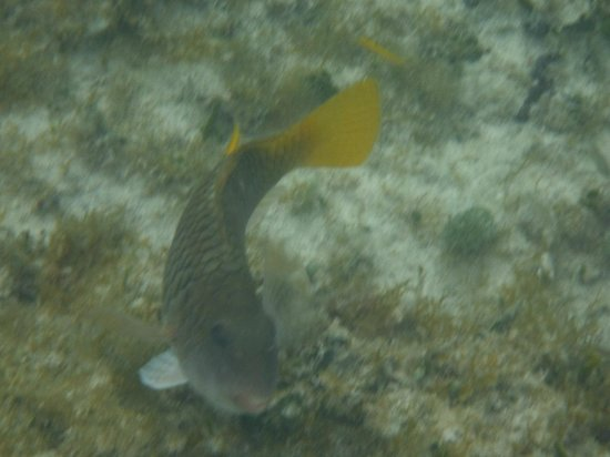 Occidental Cozumel: poisson