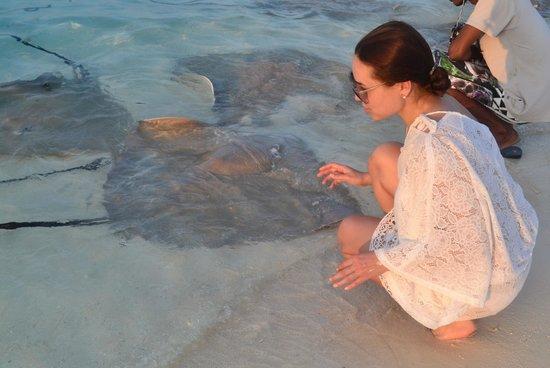 PER AQUUM Huvafen Fushi: Кормление мистеров ray-ев