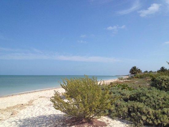 Casa de Celeste Vida: Playa del Hotel