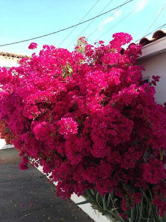Coronado Motor Hotel-Yuma: Beautiful landscaping