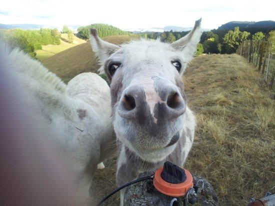 Doolan's Country Retreat: Donkeys
