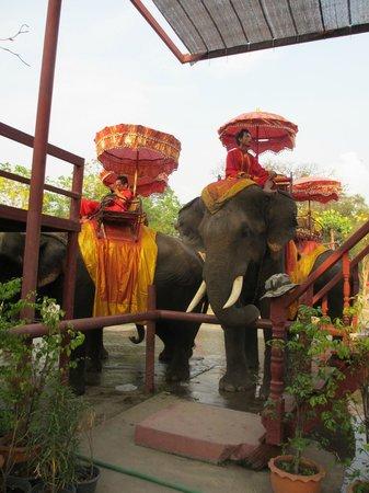 Ayuthaya Elephant Camp - Day Tours
