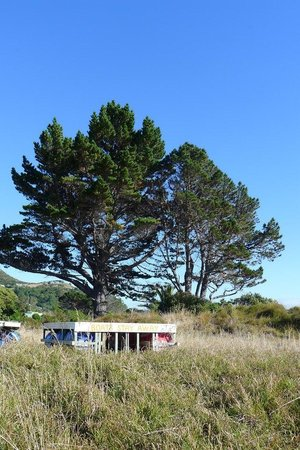 Hahei Holiday Resort: On the dunes between the beach & resort