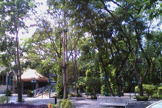 Horseshoe Point Resort & Country Club: วิวโดยรอบ