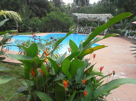 Terra Luna Lodge: Great flowers surround the pool