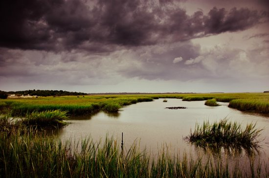 Cumberland Island, GA: Marshes