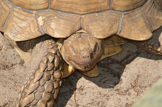 Two Tails Ranch: Giant tortises