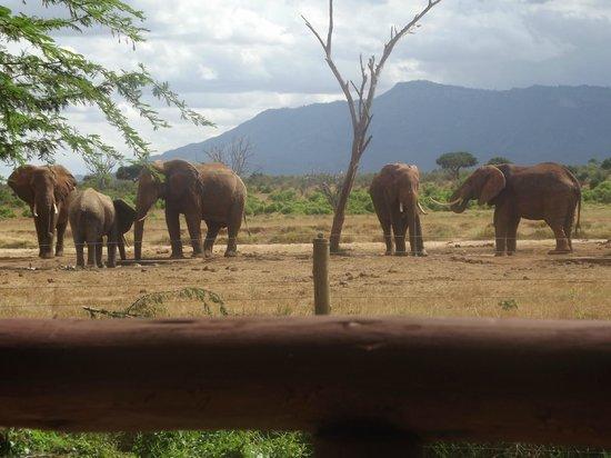 Sentrim Tsavo East: vista dalla camera
