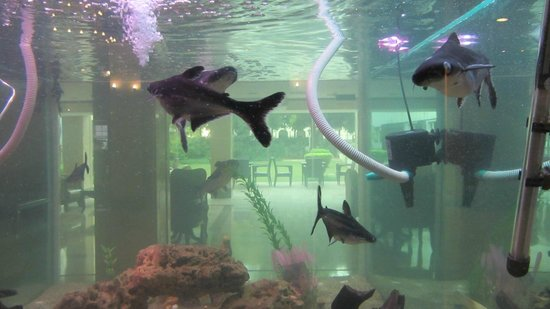 The Janpath Hotel: Aquarium in der Lobby