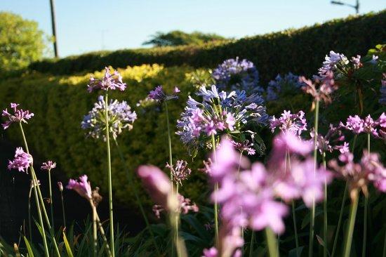 Apricot Sky B & B: Gardens