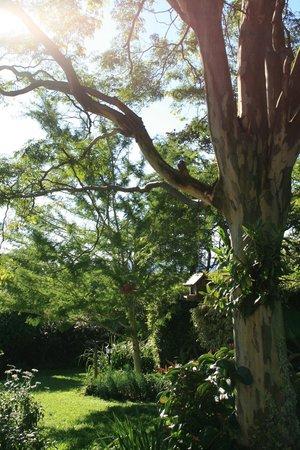 Apricot Sky B & B: Garden