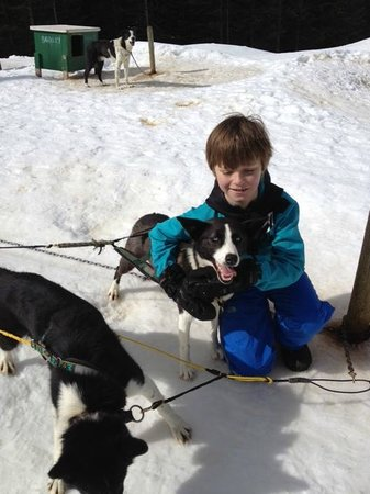 Mountain Man Dog Sled Adventures : Our Sun and Blue Eyes