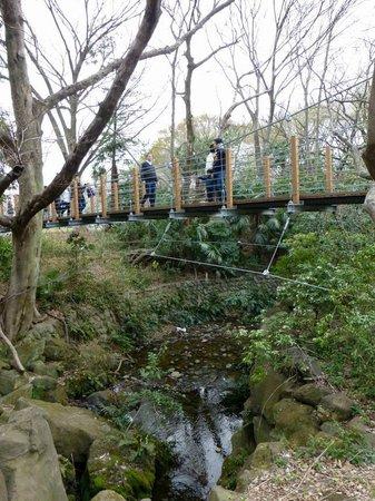 Kinuta Park: 人工の渓流ができていて、木が茂っていい感じです。