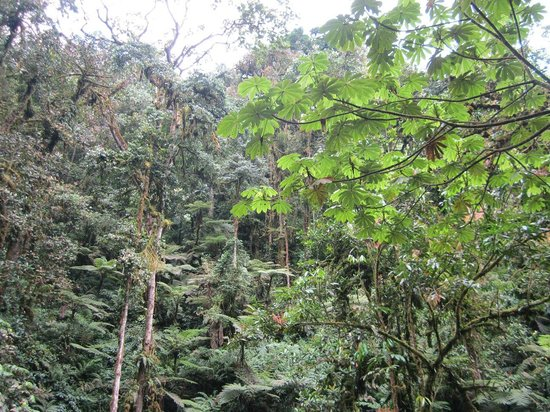 Nyungwe National Park: Nyungwe park. (Waterfalls track), Gisakura reception center