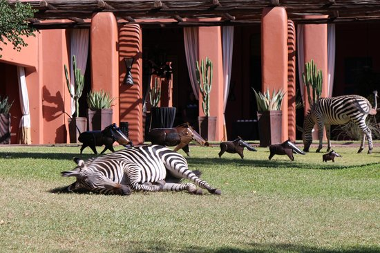 AVANI Victoria Falls Resort: Zebra on the lawn
