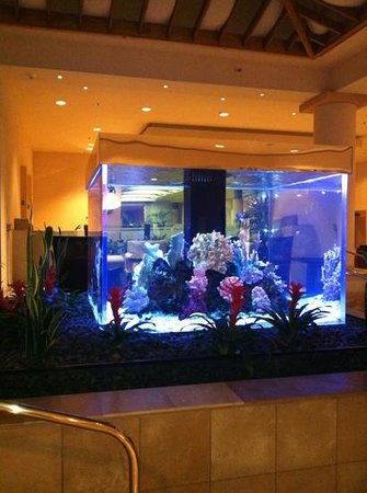 Crowne Plaza Redondo Beach & Marina: fish tank at night