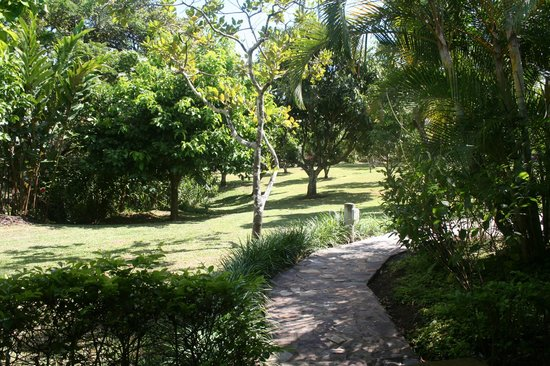 La Garita Bed and Breakfast: Garden with fruittrees