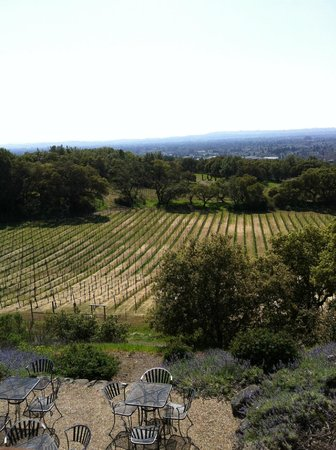 Paradise Ridge Winery: what you see behind tasting room