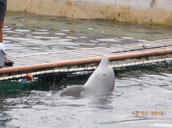 Dolphin Discovery Costa Maya: Dolphin