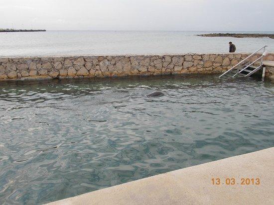 Dolphin Discovery Costa Maya: Dolphin's House