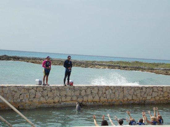 Dolphin Discovery Costa Maya: Show