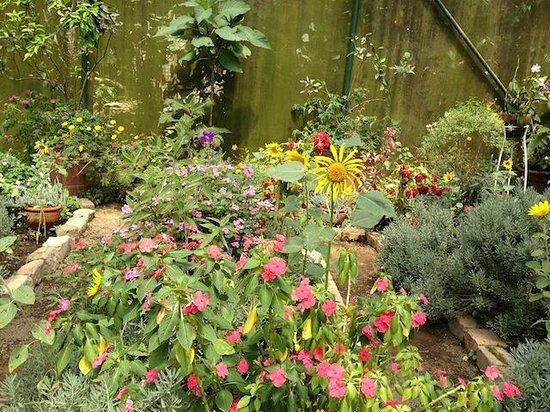 Sonya's Garden B&B: Garden