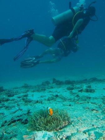 Master Divers: Clownfish