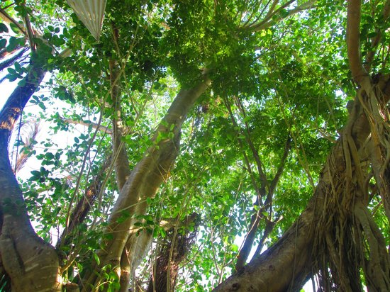 Azafran Restaurant: A look up from the outdoor garden