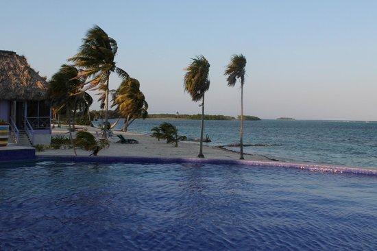 بلاكبيرد كاي ريزورت: Windswept palm trees line the resort shoreline.
