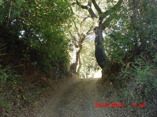 Sierra Luz: una de las magnificas sendas que parten de la puerta del hotel