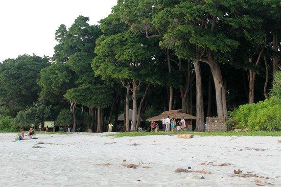 Trees at Radhanagar beach