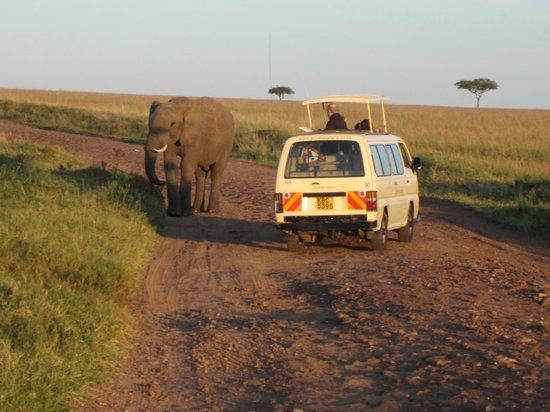 Sarova Mara Game Camp: Elephant in the road!