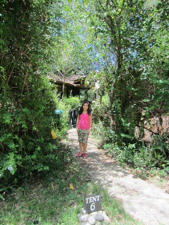 Sarova Mara Game Camp: Near our cabin