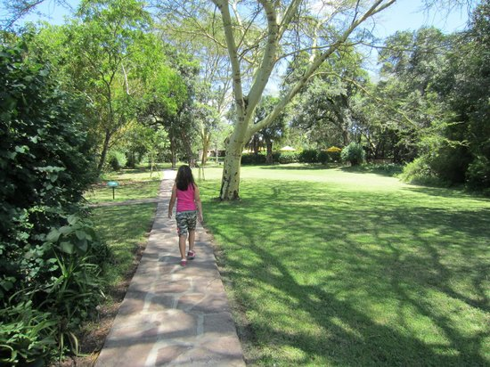 Sarova Mara Game Camp: Walking to the main building