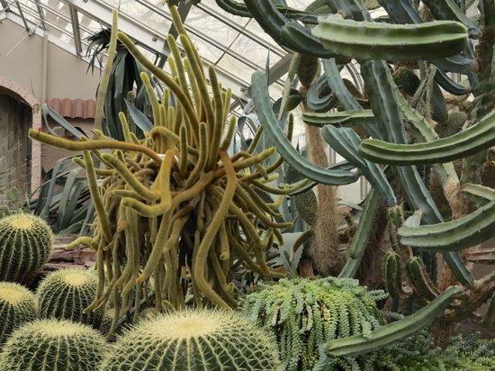 Highland Botanical Park and Lamberton Conservatory: Cactus