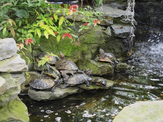 Highland Botanical Park and Lamberton Conservatory : Courtyard Gardens