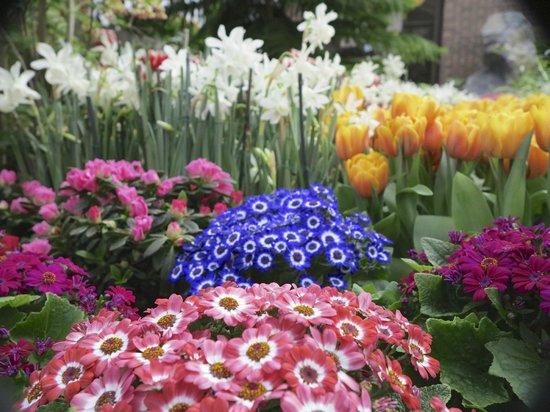 Highland Botanical Park and Lamberton Conservatory : Seasonal Display Area
