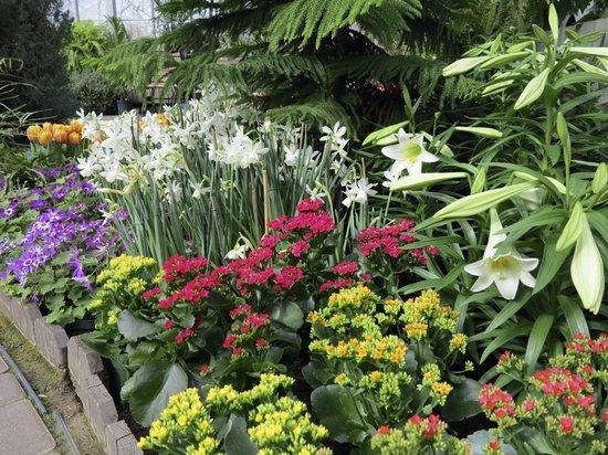 Highland Botanical Park and Lamberton Conservatory : Seasonal (Spring) Display