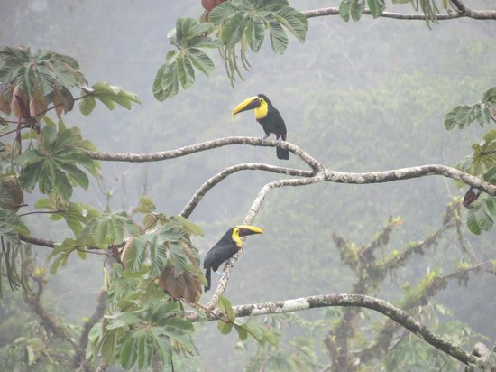 Lost Iguana Resort & Spa: Toucans in tree in front of our room