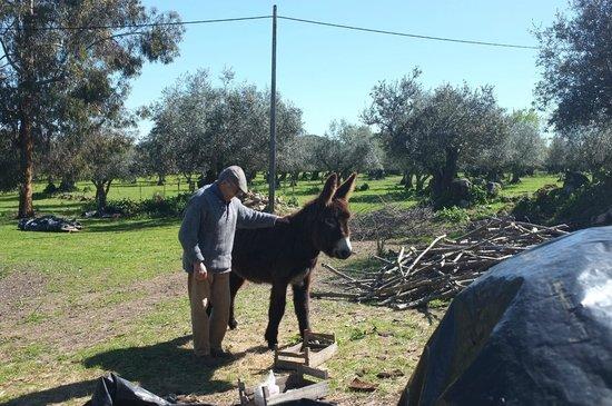 Monte do Serrado de Baixo: donkey