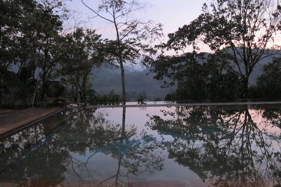 Rainforest Edge: Pool at sunset