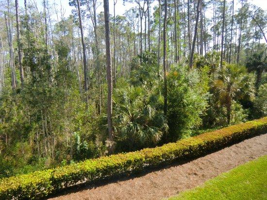 Hampton Inn & Suites Fort Myers-Estero/FGCU: Blick aus einem meiner zwei Fenster