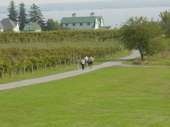 Fox Run Vineyards : We offer free tours daily (*weather permitting) through the vineyard and winemkaing facility