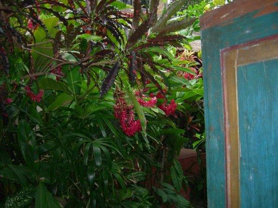 Pondok Pisces Bungalows: Entering through tropical gardens