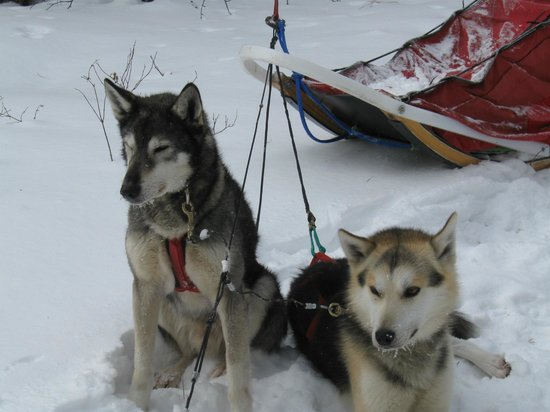 White Wilderness Sled Dog Adventures: -