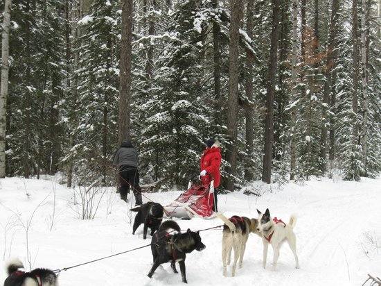 White Wilderness Sled Dog Adventures - Day Tours: *