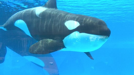 Killer whale un... I 360 Orlando