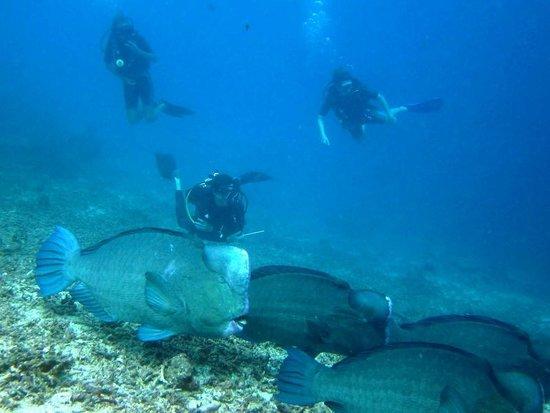 Puffer photo de manta dive gili air gili air tripadvisor - Manta dive gili ...