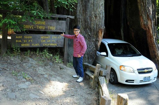 Redwood National Park: Drive through tree - 5000 years old